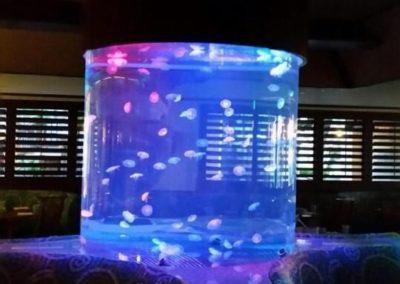 catamaran jellyfish_preview_preview