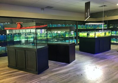 New Store Live Plant