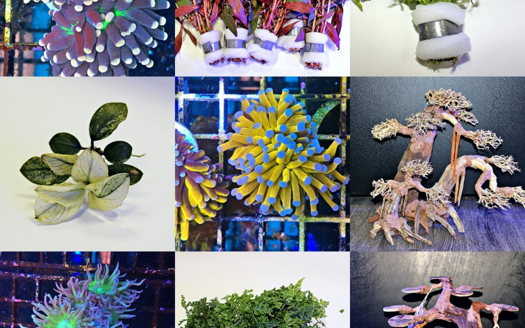 Corals, Plants and Bonsai's- OH MY!