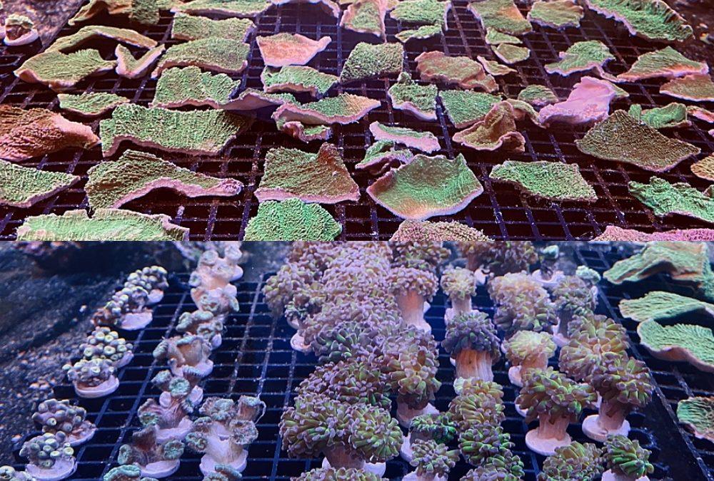 FREE Corals!!!